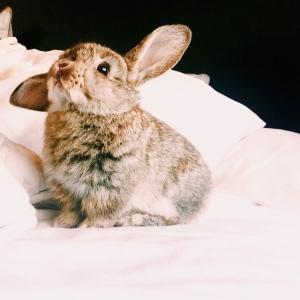 Winnie the Bunny