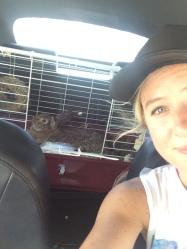 road trip with winnie